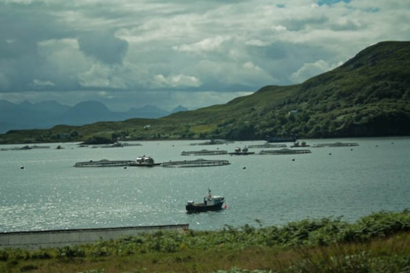 Summer Islands, Scotland. © J. Lynn Stapleton, 30th July 2013