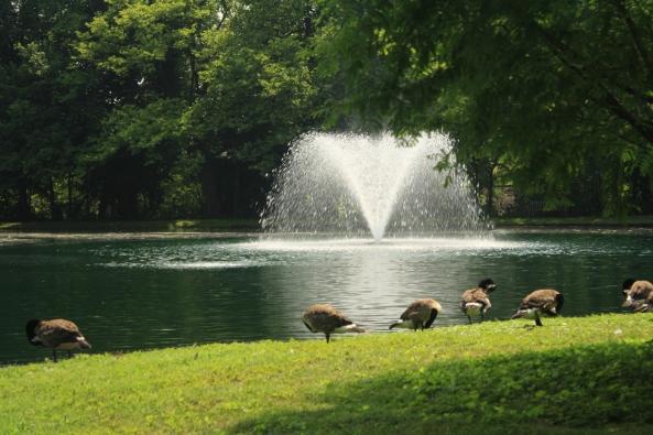 The Lake, Peapack, NJ, 6th July 2011. © J. Lynn Stapleton